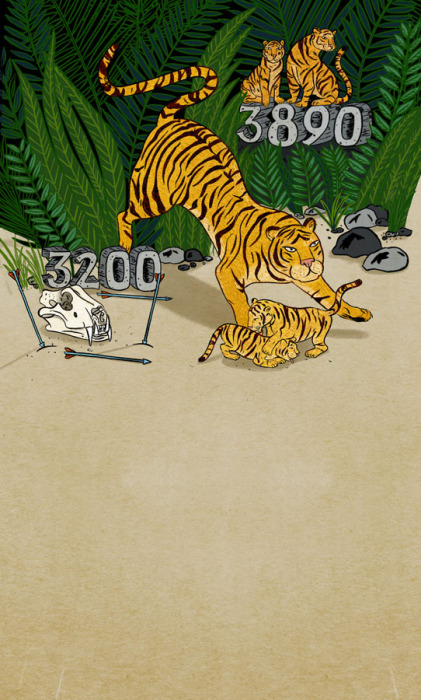 tigers_two-numbers_nagarajan
